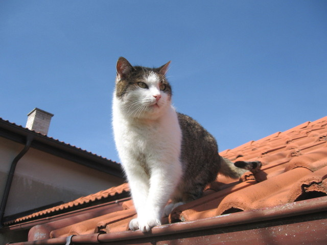 roofing installers brunswick ga